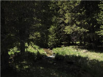terenuri speciale Padina Busteni, sunt dispuse ca o veritabila coroana in jurul lacului Bolboci